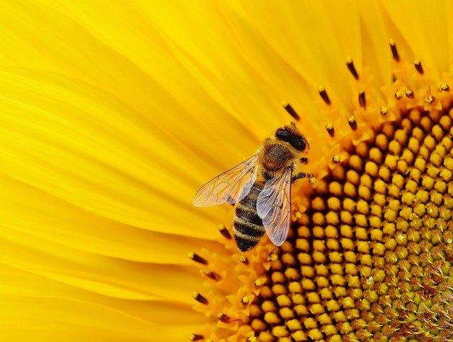 Chitín – včelí produkt